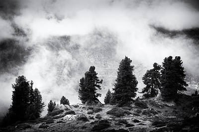 Photograph - Dark Trees In Aletsch Forest Black And White by Matthias Hauser