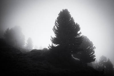 Photograph - Dark Trees In The Fog Aletschwald Forest by Matthias Hauser