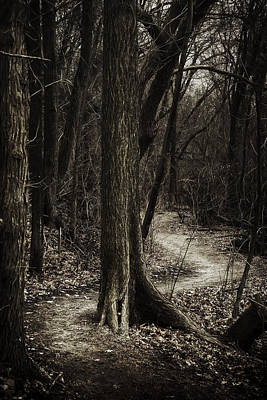 Brown Leaf Photograph - Dark Winding Path by Scott Norris