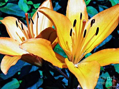 Photograph - Dark Yellow Lilies by Sarah Loft