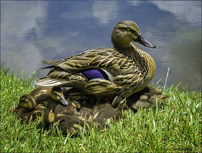 Photograph - Darling Ducklings by LeeAnn McLaneGoetz McLaneGoetzStudioLLCcom