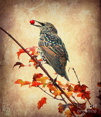 Photograph - Darling Starling by Kerri Farley