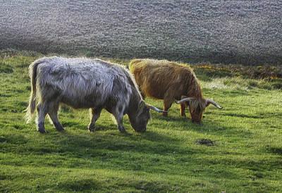 Photograph - Dartmoor Long Horns by Michael Hope