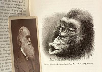 Man And Nature Photograph - Darwin On Chimpanzee Emotions by Paul D Stewart