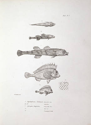 Beagle Photograph - Darwin: Zoology Of Voyage Of The Beagle by Natural History Museum, London
