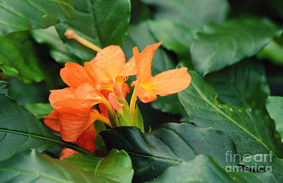 Photograph - Dash Of Orange by Jackie Farnsworth