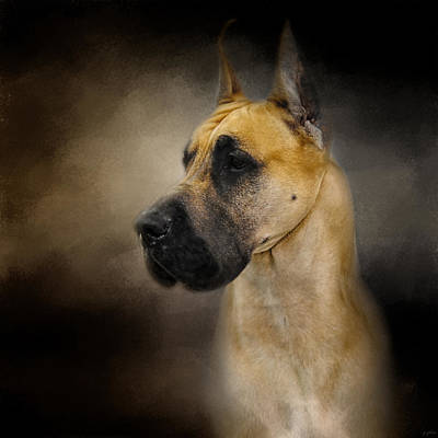 Photograph - Dashing Great Dane by Jai Johnson
