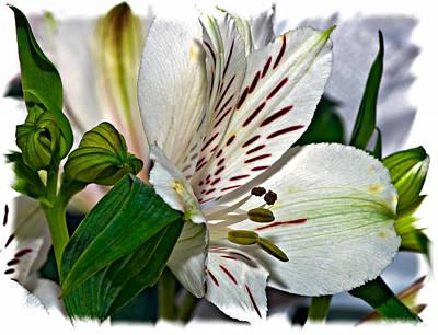 Flower Photograph - Dashing One by Steve Harrington
