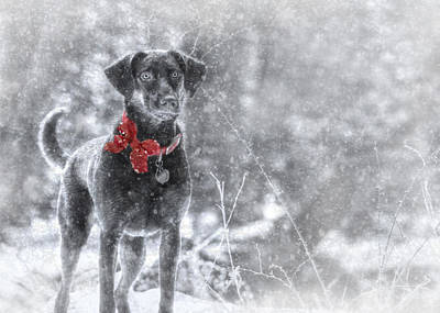 Lab Dog Digital Art - Dashing Through The Snow by Lori Deiter