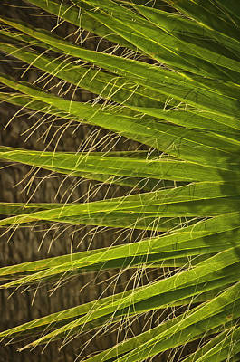 Photograph - Date Palm by Sherri Meyer