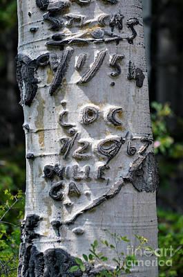 Dated Tree Art Print