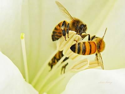 Honeybees On Moonflower Print by Chris Berry