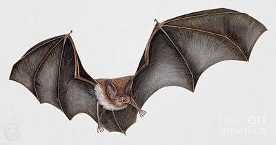Daubentons Bat Myotis Daubentonii - Murin De Daubenton-murcielago Ribereno-vespertilio Di Daubenton Art Print by Urft Valley Art