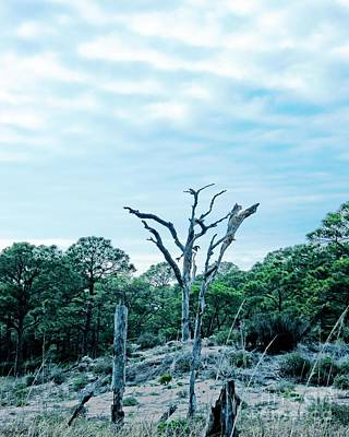 Photograph - Dauphin Island Al by Lizi Beard-Ward