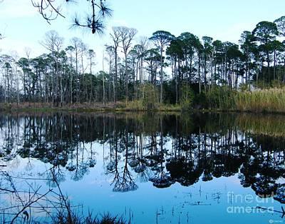 Photograph - Dauphin Island Bird Sanctuary Pond by Lizi Beard-Ward