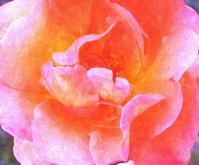 David Austins  Old World Rose Art Print by Rosemarie E Seppala