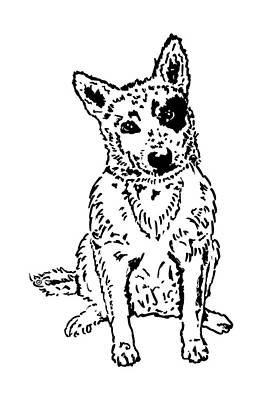 Cattle Dog Drawing - Dawg by Jacqueline Eden