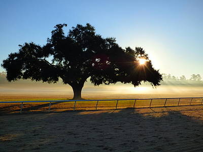 Photograph - Dawn At Aiken Training Track by Jean Wright