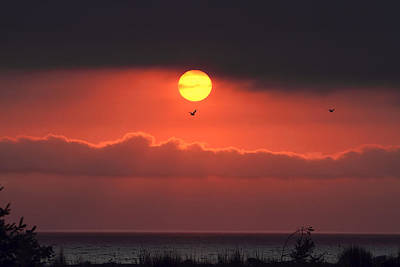 Photograph - Dawn After The Storm by Peggy Collins