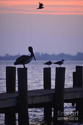 Dawn Brings Hungry Birds Art Print