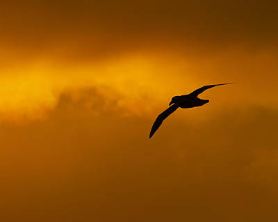 Photograph - Dawn Feeding by Tony Beck