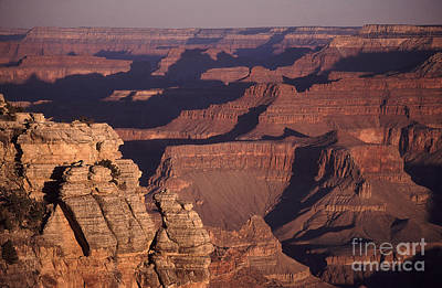 Photograph - Dawn In The Grand Canyon by Liz Leyden