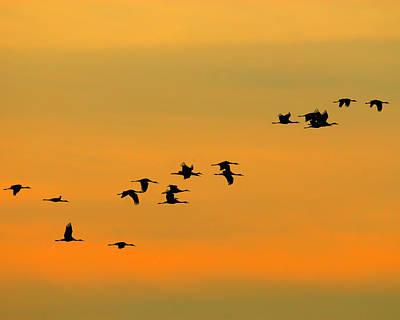 Crane Photograph - Dawn Migration by Tony Beck