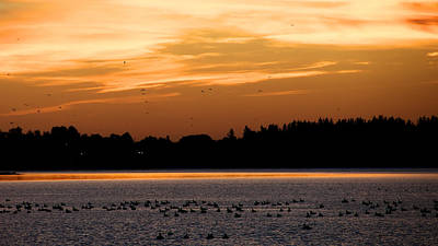 Photograph - Dawn Of The Birds by Trever Miller