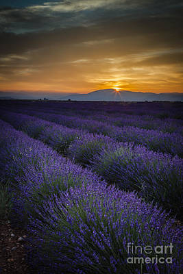 Photograph - Dawn Over Lavender by Brian Jannsen