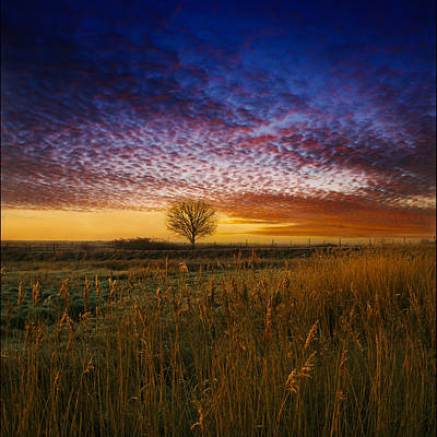 Pink Black Tree Rainbow Photograph - Dawn Over The Marshes by Adrian Campfield