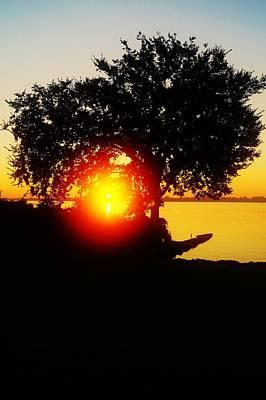 Rock Royalty - Dawn tween The Trees by Daniel Thompson