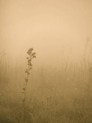 Dawning Mist Art Print by Tim Good