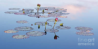 Photograph - Evening Lily Pond by Barbara McMahon