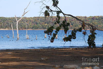 Photograph - Day At The Lake by Mark McReynolds