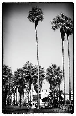 Venice Beach Palms Photograph - Day At Venice Beach by John Rizzuto