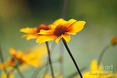 Photograph - Day In The Meadow by Lorelle Gromus