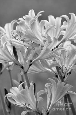 Photograph - Day Lilies by Maureen Cavanaugh Berry