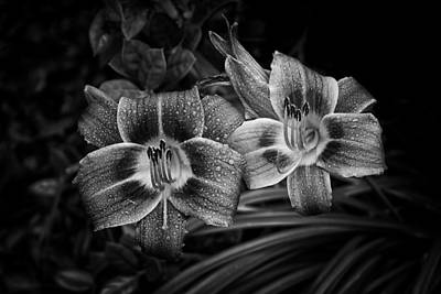Photograph - Day Lilies Number 4 by Ben Shields