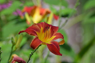 Photograph - Day Lilly by Jodi Terracina