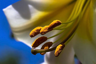 Day Lilly Macro With Sky Background Art Print by Sven Brogren