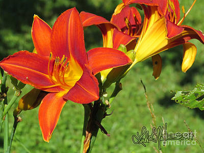 Photograph - Day Lily 3 by Linda L Martin