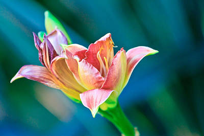 Photograph - Day Lily by Ben Graham