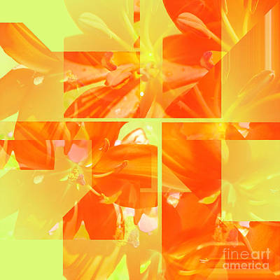 Photograph - Day Lily Collage by Barbara Moignard