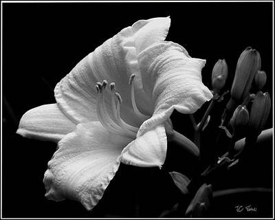 Photograph - One Day Lily  by James C Thomas