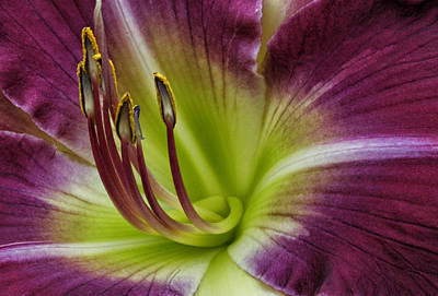 Photograph - Day Lily Intimate by Robert Woodward