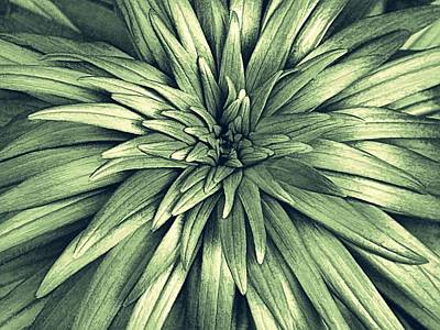Digital Art - Day Lily Soon Pp-6 by Doug Morgan