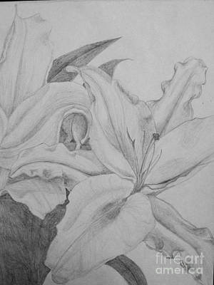 Day Lily Drawing - Day Lily by Tatiana Coffman