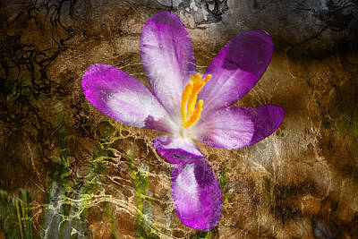 Photograph - Day Of The Crocus by Kathy Nairn