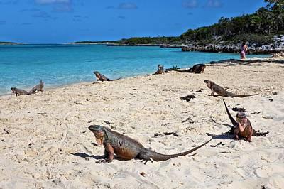 Photograph - Day Of The Iguanas by Jane Girardot