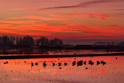 Photograph - Daybreak On The Refuge by Kathleen Bishop